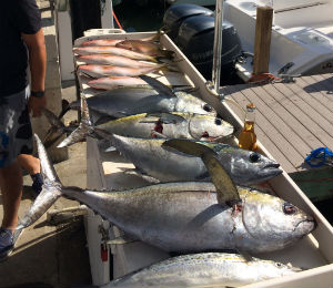 Key West Catch of the Week - October 27, 2014