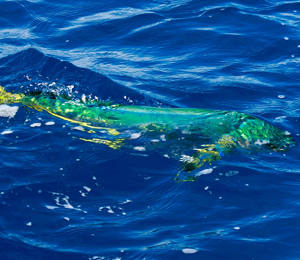 Offshore And Inshore Fishing In May